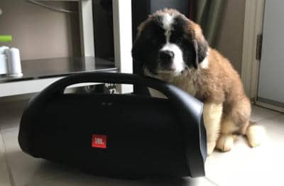 JBL Boombox with pupie
